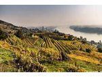 Krems - Wachau :  Garten in Traumlage  dazu eigener Wein ?  Verkaufen Weingarten mit Weinkeller und Gerätehütte