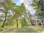 Großes Grundstück, verträumt, historisch, eigener Teich = Viel POTENTIAL **VIDEOBESICHTIGUNG MÖGLICH**