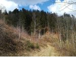 Wunderschönes Waldgrundstück im romantischen Gusental