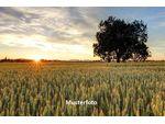 Landwirtschaftliches Anwesen - Versteigerungsobjekt -