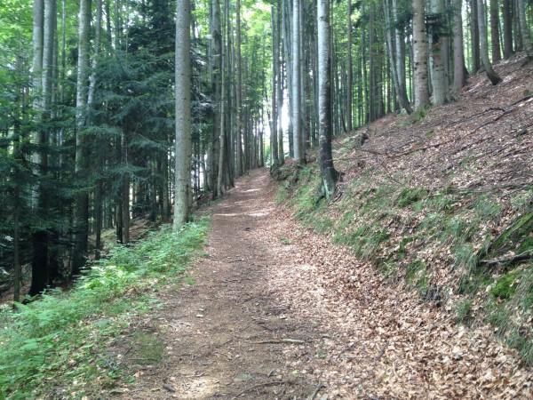 Am Waldweg zum Fasserfall