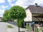 Baumschnitt in Leibnitz