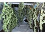 Marihuana sichergestellt – Drei Verdächtige ausgeforscht.