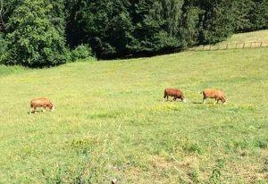 --- RESERVIERT --- Bauernhof mit 12 ha Grund, Fernsicht