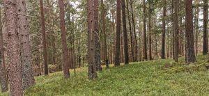 Sehr gut bestockte Waldparzelle, am Petelin