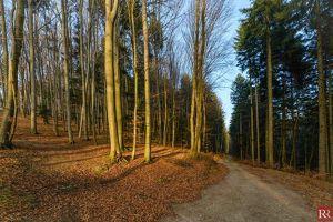 Großzügiger und gepflegter Forst im Wienerwald