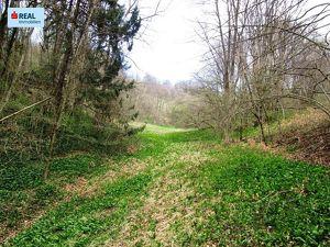 4,3 ha Wald Nähe Kilb - provisionsfrei für den Käufer