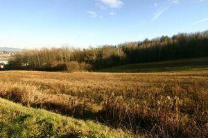 Einmalige Geldanlage! 1 HektarBauland mitten in Oberwart, Aussichtslage, KEIN Bauzwang! 40% bebaubar.
