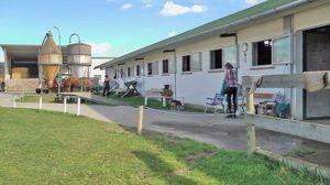 Profi Reitbetrieb, - Reiterhof in Bad Blumau