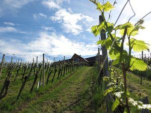 Einzigartiges Landhaus mit eigenem Weingarten