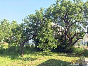 Sonnendurchfluteter Bungalow auf einem Grundstück mit 545 m² in wunderbarer Grünlage nahe von Wien.
