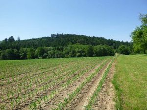 1 ha sonniges Grundstück mit 2.336m² Bauland in einer der schönsten Regionen Österreichs