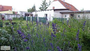 Bungalow mit Nebengebäuden im Herzen von Parndorf
