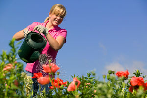 Helfer/in für einen Gärtner gesucht