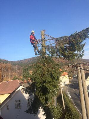 Wir schlagen die Bäume in  Poysdorf
