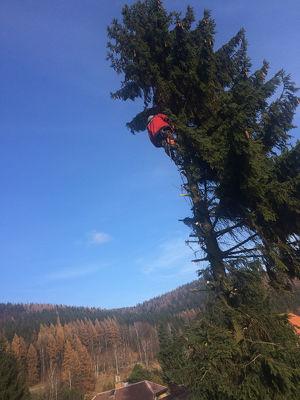 Wir schlagen die Bäume in  Zistersdorf