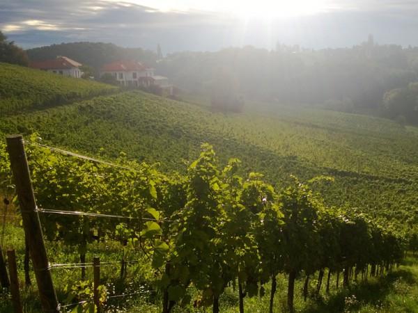 Morgensonne über dem Weingut