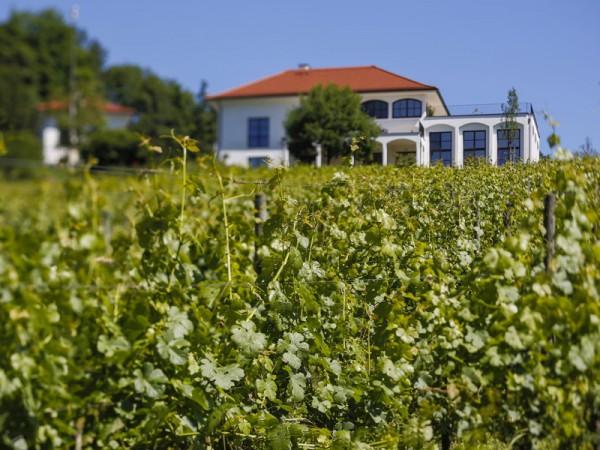 Vom Weingarten aus gesehen