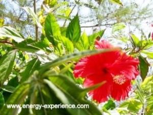 Energy-Experience - Massage, Energie-Klang-u. Körperarbeit, Yoga