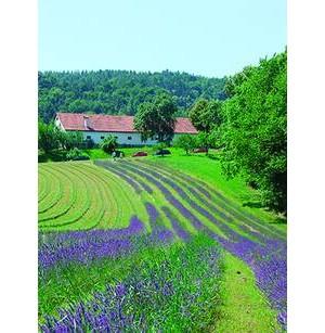 Lavendelhof Wunsum