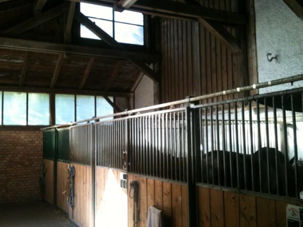 Auch alle Innen-Boxen sind groß (3×4 Meter), hell und meist mit hohen Decken