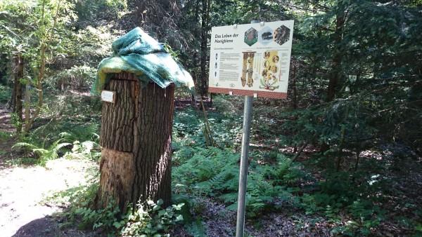 Schau-Bienenstock