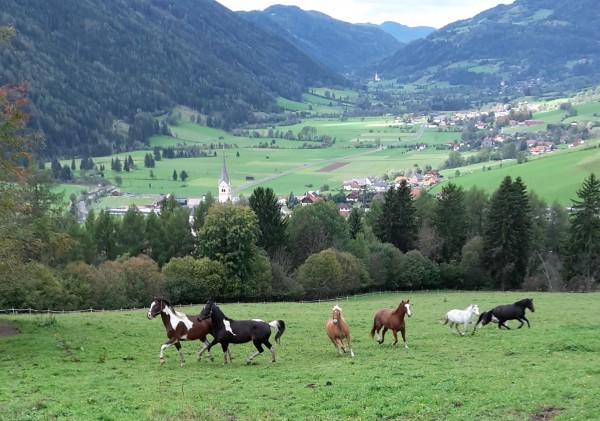 Kosten single in bad waltersdorf - Viktring singlebrsen - Neu