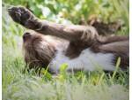 Verhaltensberatung für Hundebesitzer