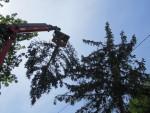 Baumabtragung, Baumentfernung maschinell inkl. Abtransport