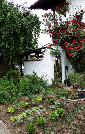 Der biologische Hausgarten - von der Aussaat bis zur Pflanzung
