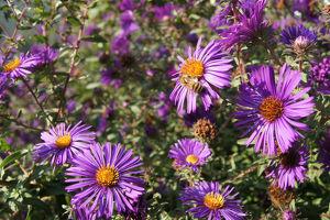 Thementag: Bienen-Neujahr