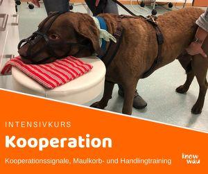 Schwerpunkt Kooperation (Medical Training)